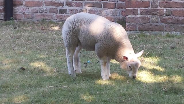 lammetje-voorburg-vegan