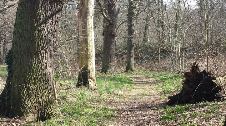 bospad-park-sorghvliet