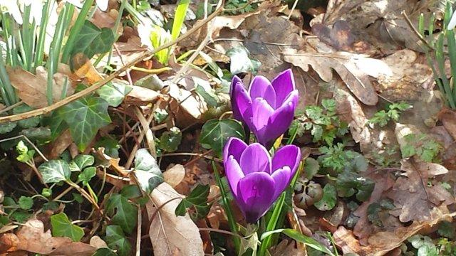 bloemen-park-sorghvliet