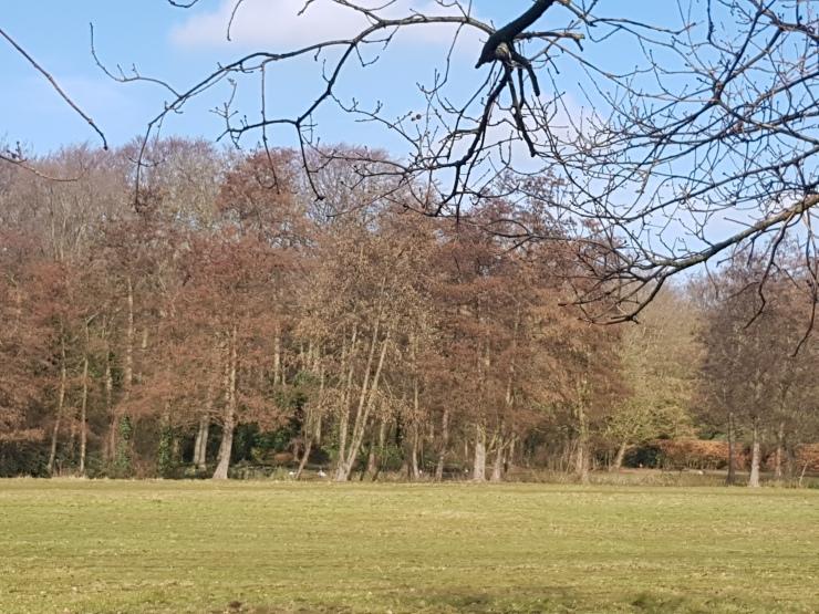 park-clingendael-wandeling-weiland
