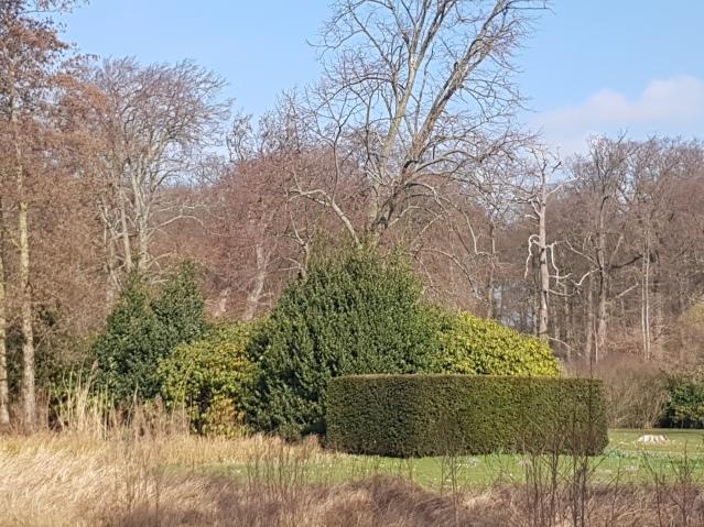 park-clingendael-wandeling-natuur