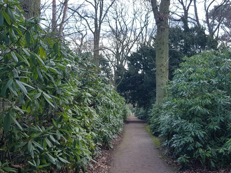 park-clingendael-wandeling-struiken