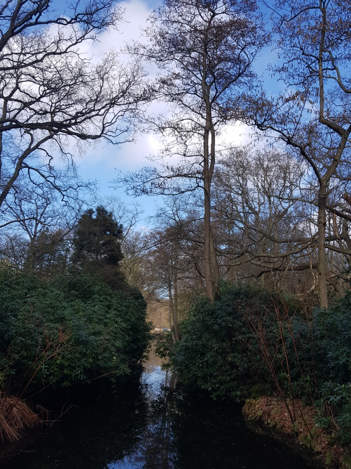 park-clingendael-wandeling-weerspiegeling-struiken
