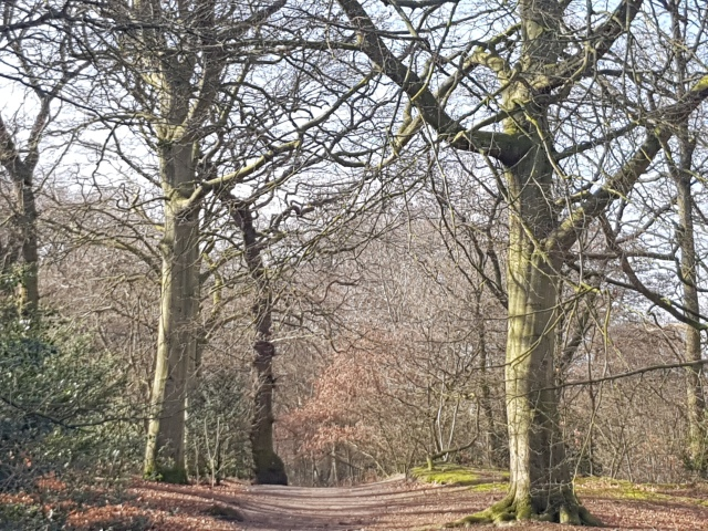 park clingendael wandeling bomen ruychrocklaan