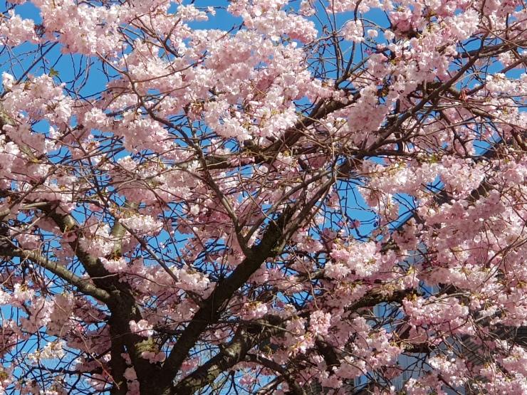 lente-bloemen-2