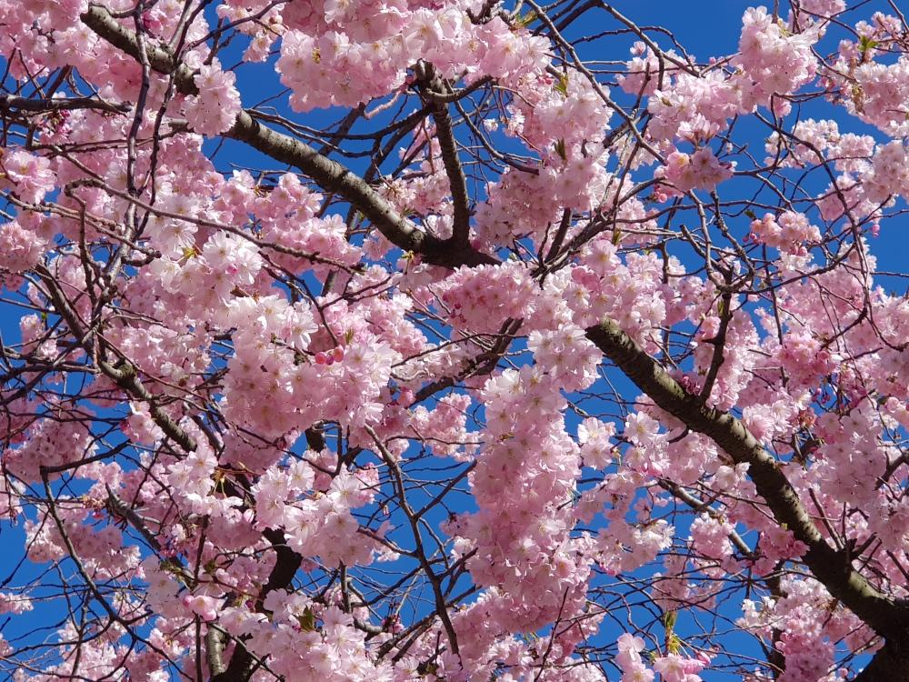 lente-bloemen-1