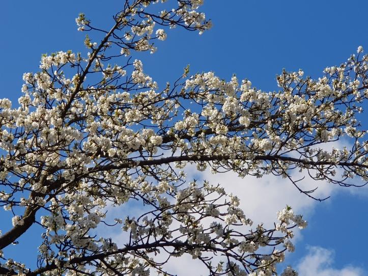 lente-bloemen-3