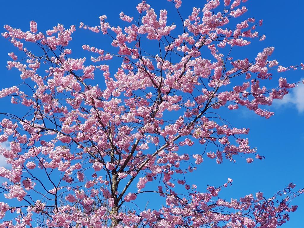 lente-bloemen-5