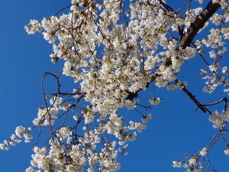 lente-bloemen-4