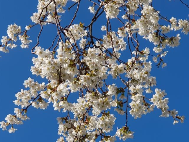 lente-bloemen-6