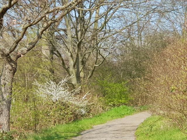 wandeling-scheveningse-bosjes-1
